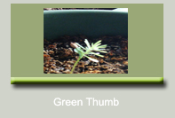 Green Thumb Resources